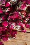 干玫瑰色芽 免版税库存图片