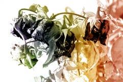 干玫瑰花束与干绿色叶子的 库存图片