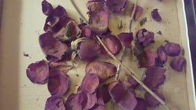 干玫瑰花瓣 库存照片
