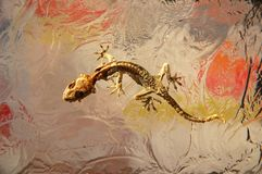 干玻璃蜥蜴 免版税图库摄影