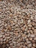 干的斑豆 免版税库存照片