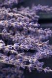 干的淡紫色开花宏观照片 定调子 文本的空间 温泉和放松概念 图库摄影