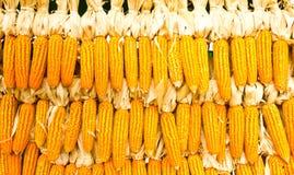 干的玉米 库存照片