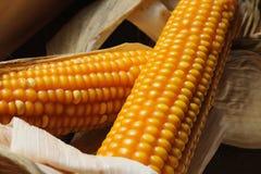 干的玉米 库存图片