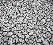 干盐湖床,加拉帕戈斯 图库摄影