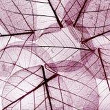 从干秋天叶子的紫色背景 免版税库存图片