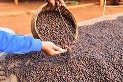 干粗粒咖啡豆。 免版税库存照片