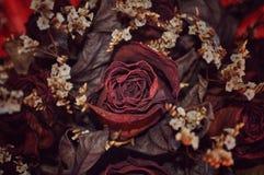 干红色玫瑰色花 库存照片