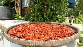 干红色chillis由阳光保存 库存图片