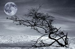 干结构树和满月 免版税图库摄影