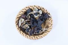 干耳朵蘑菇;耳状幼虫耳状报春花judae,在白色backgr 免版税图库摄影