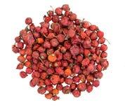 干臀部上升了 堆dogrose 莓果野玫瑰果 库存图片