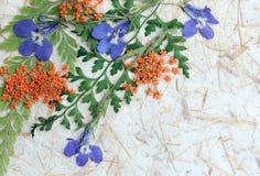 干花和叶子背景 库存图片