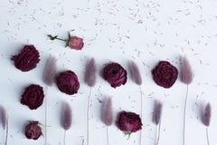 干花淡紫色,紫色和桃红色lagurus和玫瑰与种子在白色桌面 在白色背景的顶视图墙纸 免版税库存照片