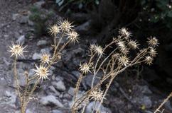 干花静物画在灰色背景的背景的,从那里花是flowerhead以形式 免版税库存图片