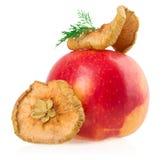 干苹果和新鲜的苹果在白色背景 免版税库存图片