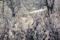 干草。树冰。 库存图片