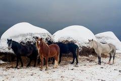 以干草为背景的马在冬天 免版税库存照片