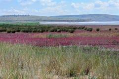 干草原克里米亚 免版税库存图片
