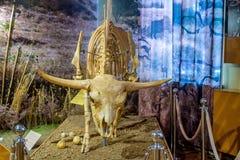 干草原北美野牛或北美野牛priscus骨骼在博物馆 免版税图库摄影