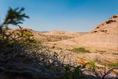 干草原和山的看法通过杜松丛林 免版税库存照片