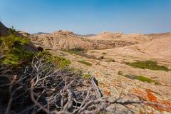 干草原和山的看法通过杜松丛林 免版税库存图片