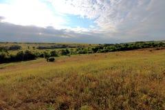 干草原在乌克兰 干草原植物 Stipa borysthenica 丛生草valesiaca 免版税库存图片