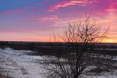 干草原在早期的春天有雪的和反对日落的一棵唯一树的风景 免版税库存图片