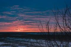 干草原在早期的春天有雪的和反对日落的一棵唯一树的风景 免版税库存照片