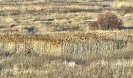 干草原干燥薹 库存照片