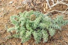 干草原的一棵植物 库存照片