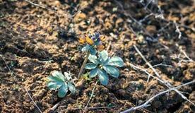 干草原的一棵植物 免版税图库摄影