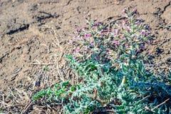 干草原的一棵植物 图库摄影