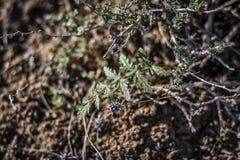干草原的一棵植物 免版税库存照片