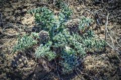 干草原的一棵植物 库存图片