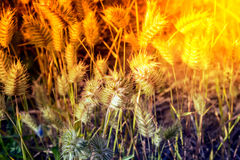 干草原的一棵植物 免版税库存图片