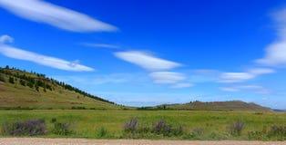 干草原的夏天风景 免版税库存照片