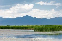 干草原的河 大草原 免版税库存图片