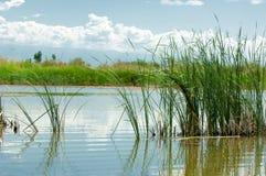 干草原的河 大草原 免版税库存照片