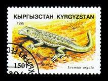 干草原赛跑者(Eremias arguta),爬行动物serie,大约1996年 库存图片