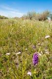 干草原,大草原,草原, veldt 库存图片