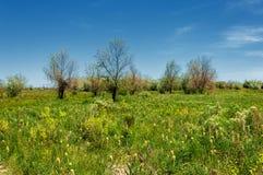干草原,大草原,草原, veldt 库存照片