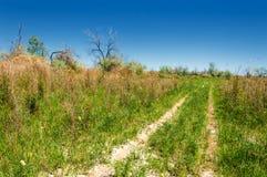 干草原,大草原,草原, veldt 免版税图库摄影
