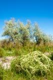 干草原,大草原,草原, veldt 免版税库存图片