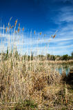 干草原,大草原,草原, veldt 免版税库存照片