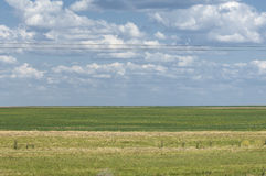 干草原,大草原,草原, veldt 图库摄影