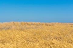 干草原 乌克兰,欧洲 库存照片