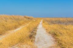 干草原 路 乌克兰,欧洲 库存照片