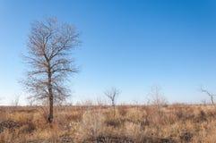 干草原 库存图片