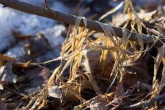 干草和一个多雪的领域 免版税库存照片